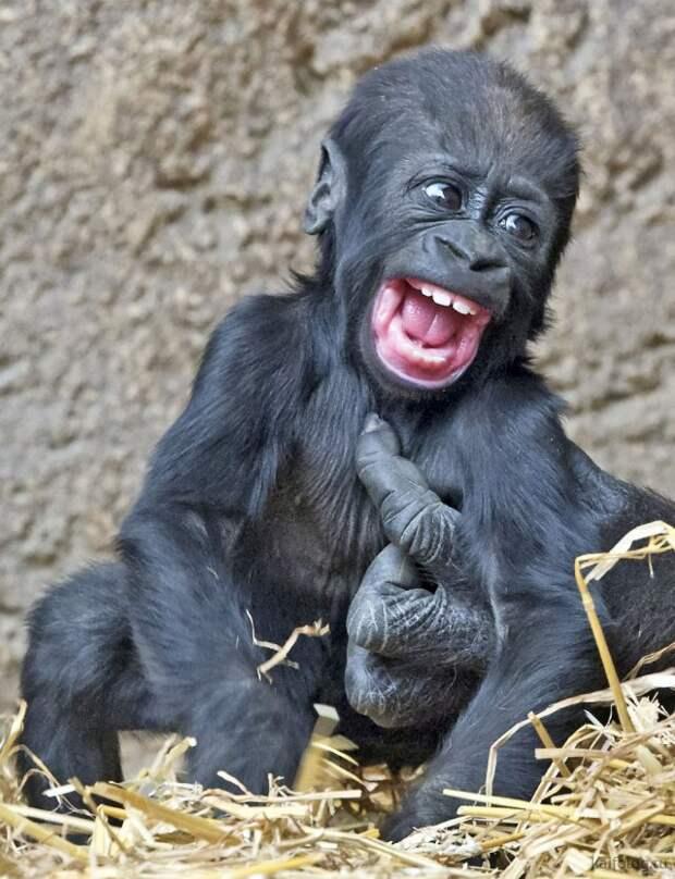 Смешные фото животных (35 штук)