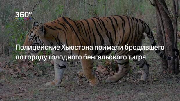Полицейские Хьюстона поймали бродившего по городу голодного бенгальского тигра