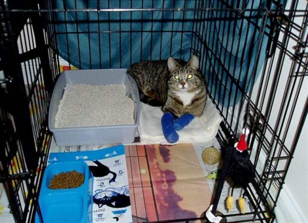 Невезучий парализованный кот стал снова ходить благодаря тому, что научился плавать!