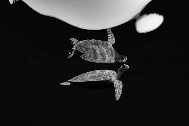 Лучшие фото подводной жизни