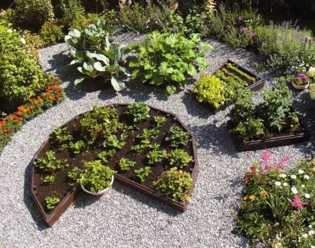 Полезный и красивый декоративный огород