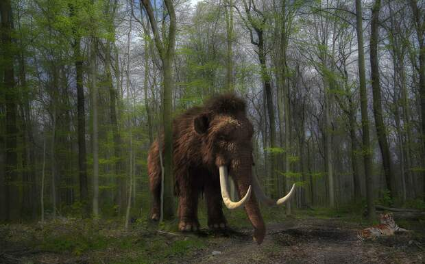 200 скелетов мамонтов обнаружили в Мексике