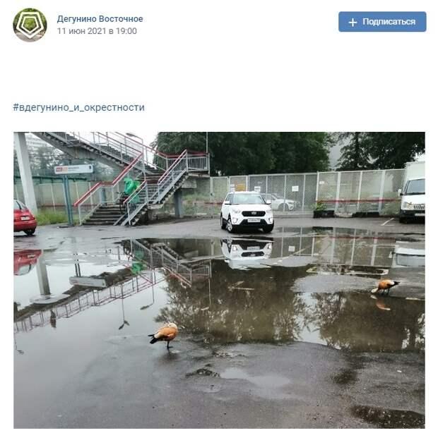 Фото дня: огари у платформы «Бескудниково»