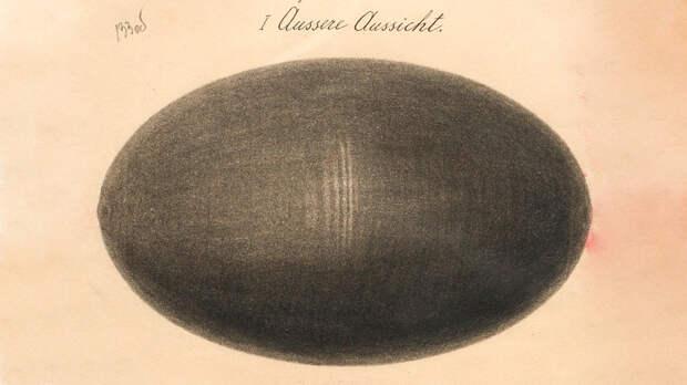 «Яйцо смерти»: самое футуристическое оружие начала 20 века