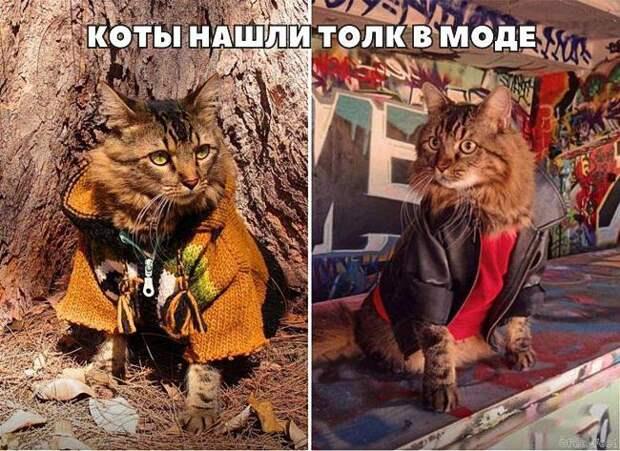 20 фотографий, доказывающих, что кошки медленно превращаются в людей