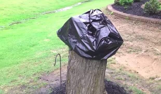 Мастерица решила использовать пень, оставшийся от срубленного дерева, неожиданным образом