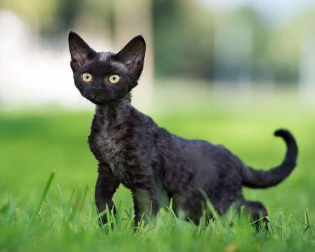 Разносчицы удачи -  фотографии загадочных чёрных кошек