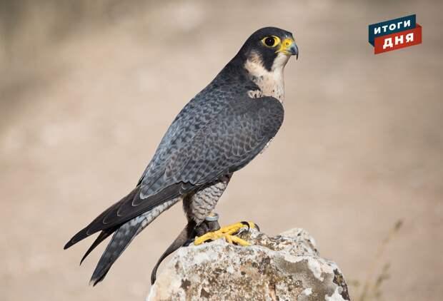 Итоги дня: рост числа заболевших коронавирусом в Удмуртии, новые светофоры в Ижевске и гнездо краснокнижных птиц