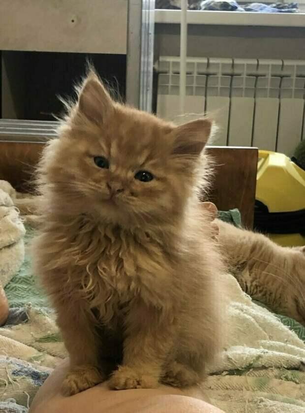 Крошечного котенка бросили, когда он уже ничего не мог видеть…