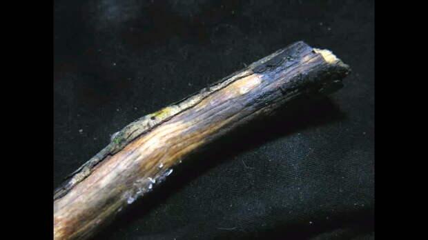 Почему в лесу растет «волосатый лед» — загадка, которую очень долго не могли разгадать
