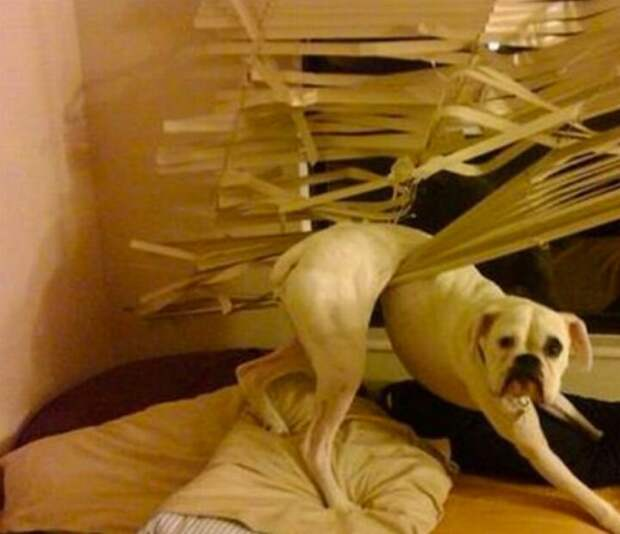 Собака-застревака животные, застряли, любопытные, смешные, фото