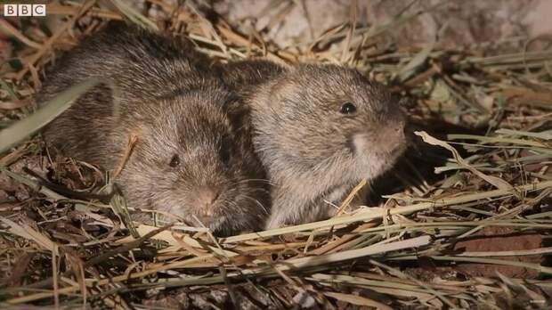 Видео: Какие животные могут испытывать сочувствие и сострадание
