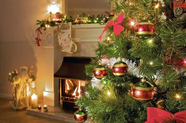 Вот такой уютный пушистый шарик ищет дом! Давайте сотворим для него новогоднее чудо!