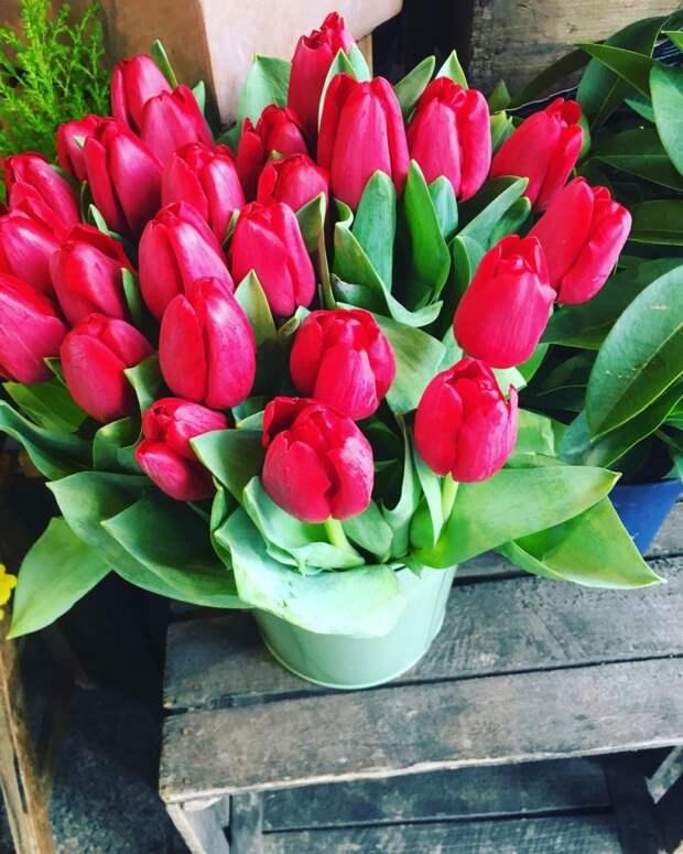 Весна в Париже и радость бытия