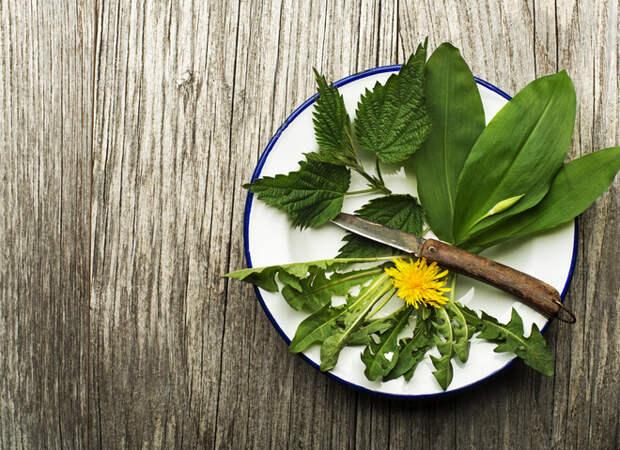 Салаты из сорняков: ТОП-3 рецепта здорового питания