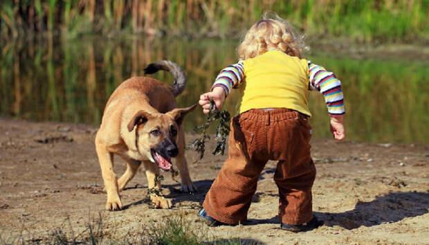 Бродячие собаки растерзали четырехлетнего ребенка в Башкирии