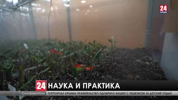 Крымские учёные разработали технологию размножения плодовых деревьев и запатентовали новые сорта растений
