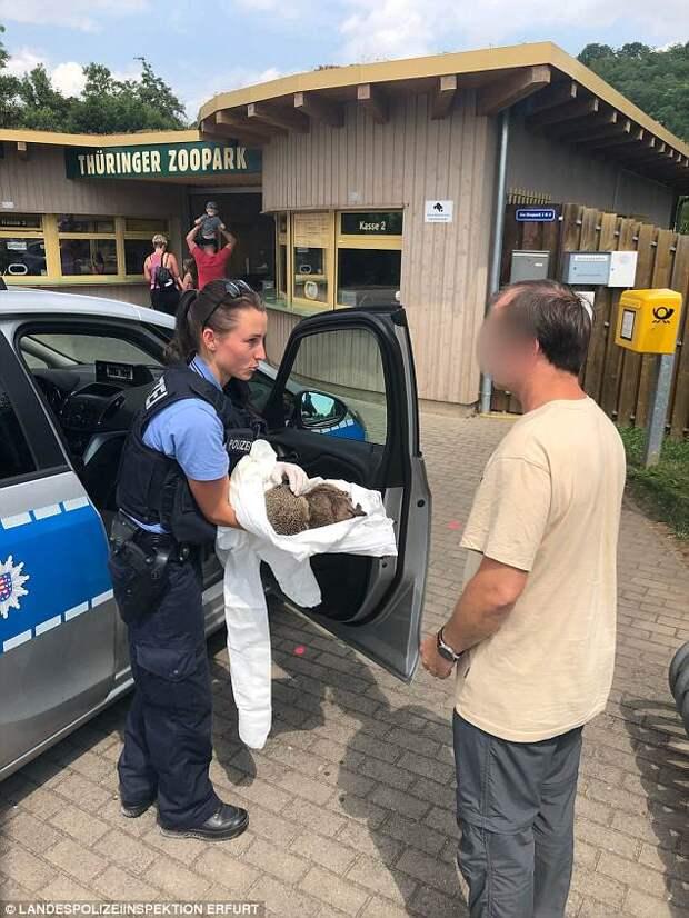 Пьющий еж — горе в семье: в Германии двух ежиков спасли от похмелья
