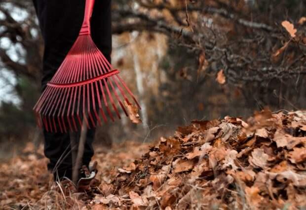 Что делать с листовым опадом