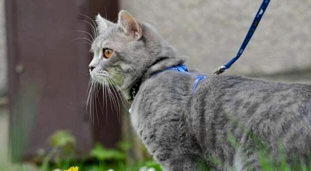 Кот-поводырь или невозможное - возможно