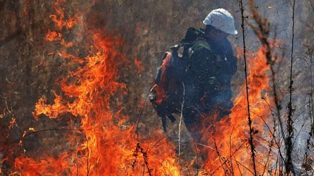 В Тюменской области зафиксировали лесной пожар