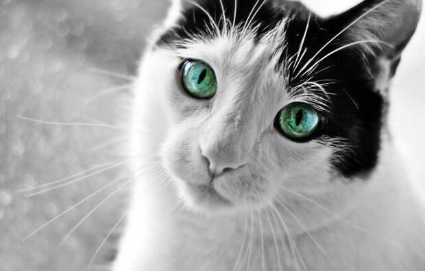 Фашисты наступали и мы еле успели бежать из города, в панике забыв родного кота ' , - поведал древний дед