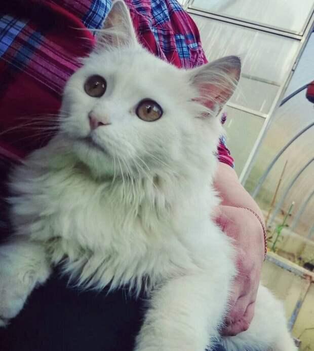 Кот Гавр приводит домой своих беспризорных подруг рожать котят