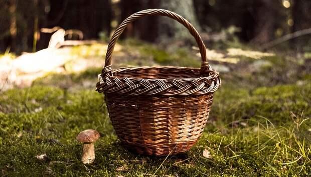 В Подмосковье начинается грибной сезон