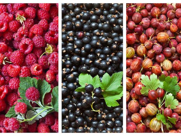 Вот как увеличить урожай малины, смородины и крыжовника в три раза!
