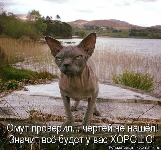 1474017312_kotomatricy-22