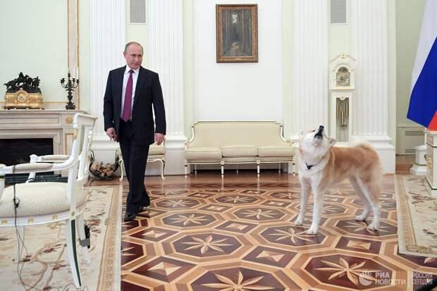 Создать общие правила содержания животных в стране потребовал Путин