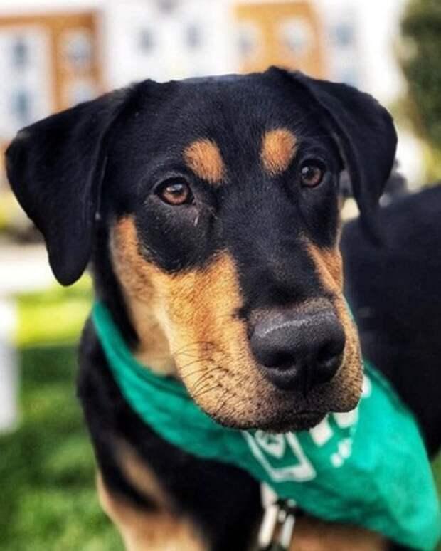 Собака с платком