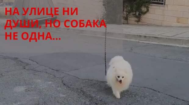 Маленькая собачка идёт по пустым улицам. Её хозяин на самоизоляции, а вокруг ни души, но компания у малышки всё-таки есть