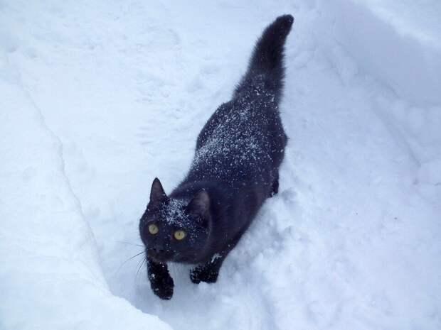 Под выброшенной ёлкой сидел распушившийся чёрный кот-красавец. Сразу видно, домашний, но не нужный хозяевам