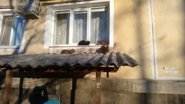 А Васька выйдет? Хвостатые, братья наши меньшие, город, кот, кошка, улица, уличные кошки, эстетика