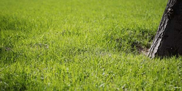 Ограждения газона не вернутся на Новопетровскую
