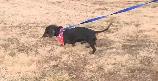 Собака лежала неподалеку от трассы, но не могла даже пошевельнуться, ни лаем позвать на помощь