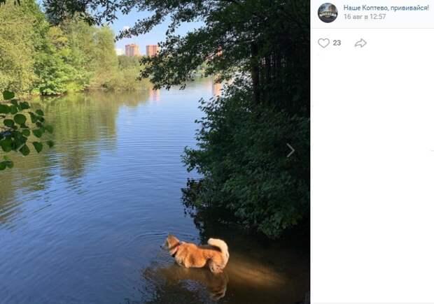 Фото дня: купальный сезон на Большом Садовом пруду продолжается