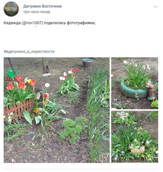 Фото дня: цветущие дворики Восточного Дегунина