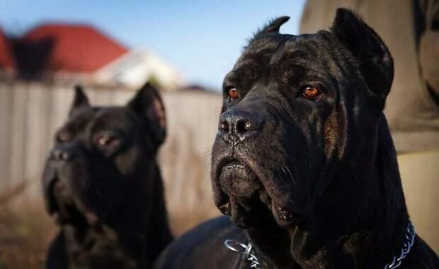 В Харькове собаки загрызли пожилую женщину