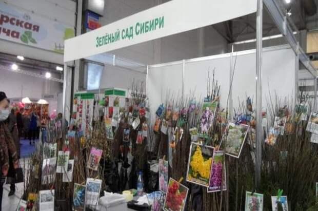 В Красноярске южные саженцы продавали под видом сибирских