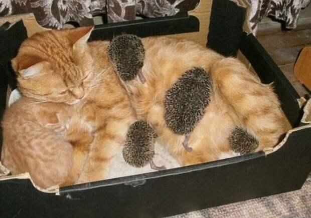 Один рыжий и четыре колючих: необычные детки кошки Сони