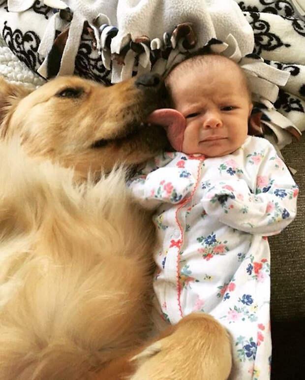 Пёс, очевидно, очень любит девочку, а вот та, похоже, ещё не совсем уверена.