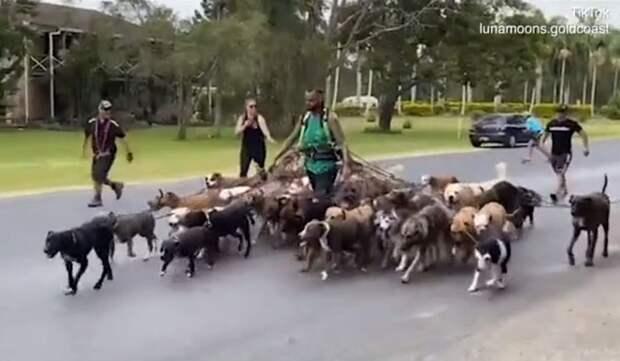 Мужчина выгулял 55 собак в попытке побить мировой рекорд