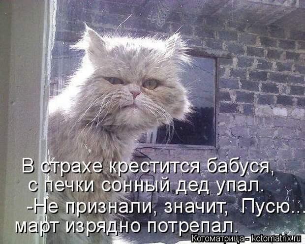 1474017316_kotomatricy-28