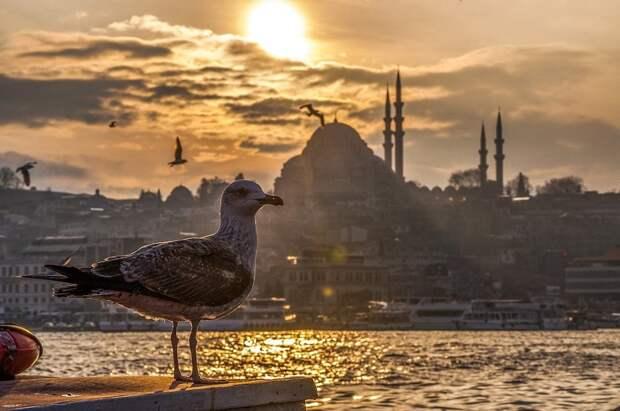 COVID-катастрофа в Турции и Танзании