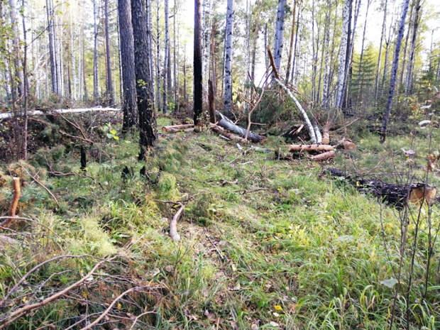 В Чунском районе 14 местных жителей обвиняются в незаконной рубке леса на пять миллионов рублей