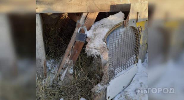 Охотники высказали версию о звере, убивающем собак в Ядринском районе