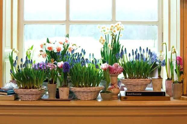 Советы для цветущих растений в феврале месяце.