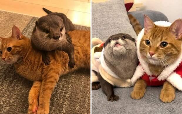 Милая дружба выдры и котенка очаровала пользователей интернета
